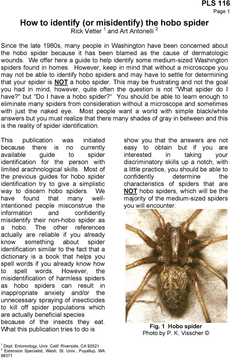 However, keep in mind that without a microscope you may not be able to identify hobo spiders and may have to settle for determining that your spider is NOT a hobo spider.