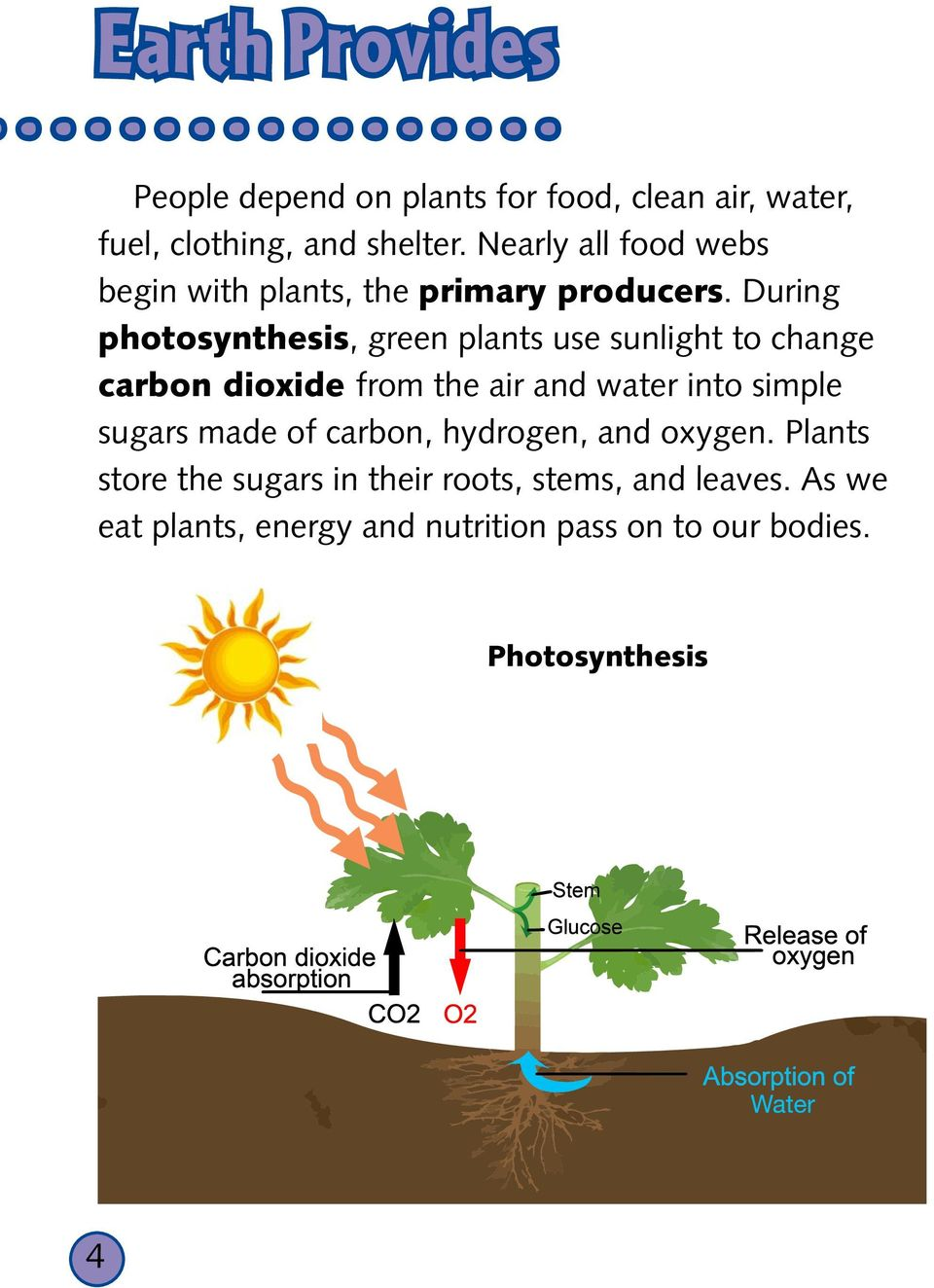 During photosynthesis, green plants use sunlight to change carbon dioxide from the air and water into simple sugars