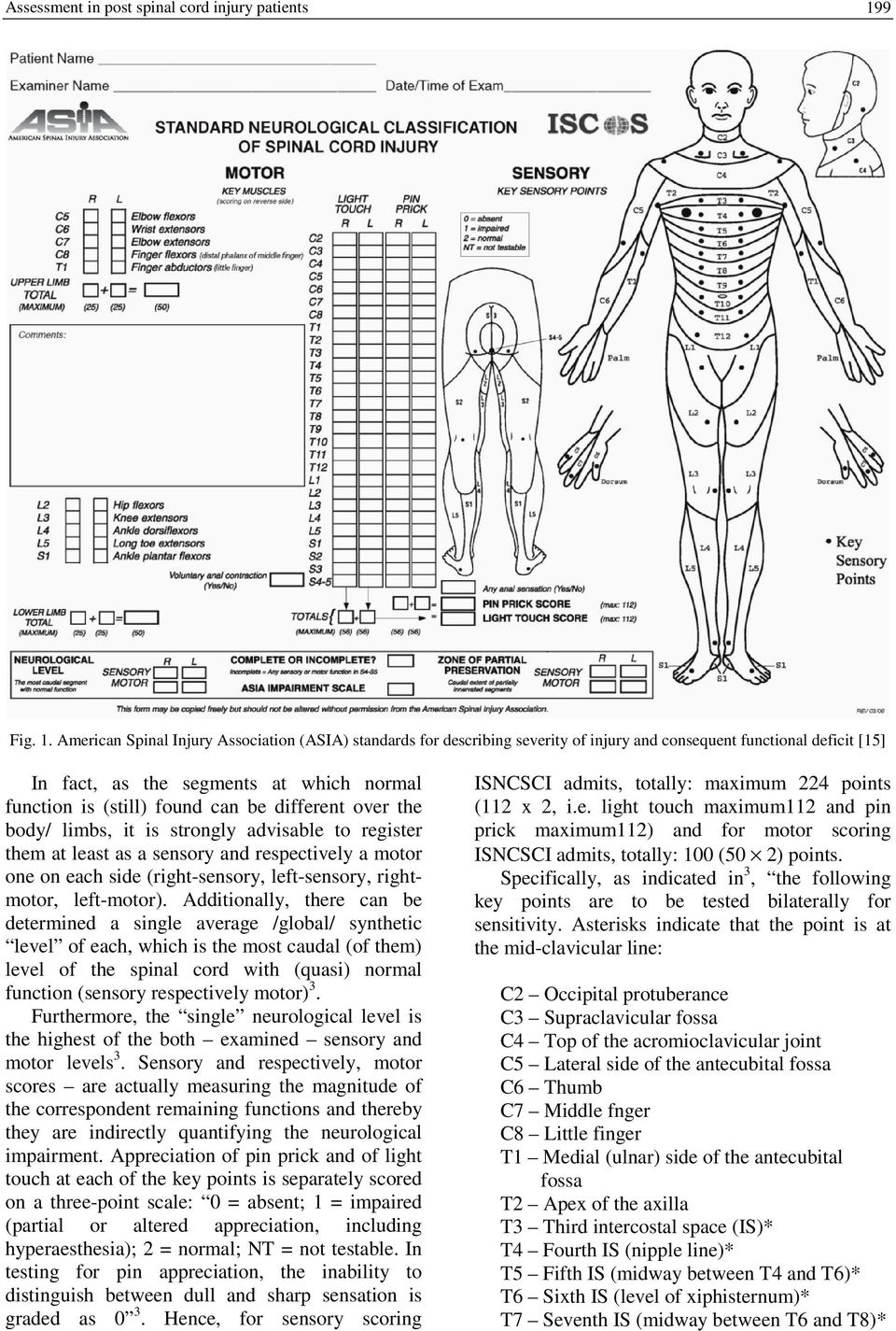 American Spinal Injury Association (ASIA) standards for describing severity of injury and consequent functional deficit [15] In fact, as the segments at which normal function is (still) found can be
