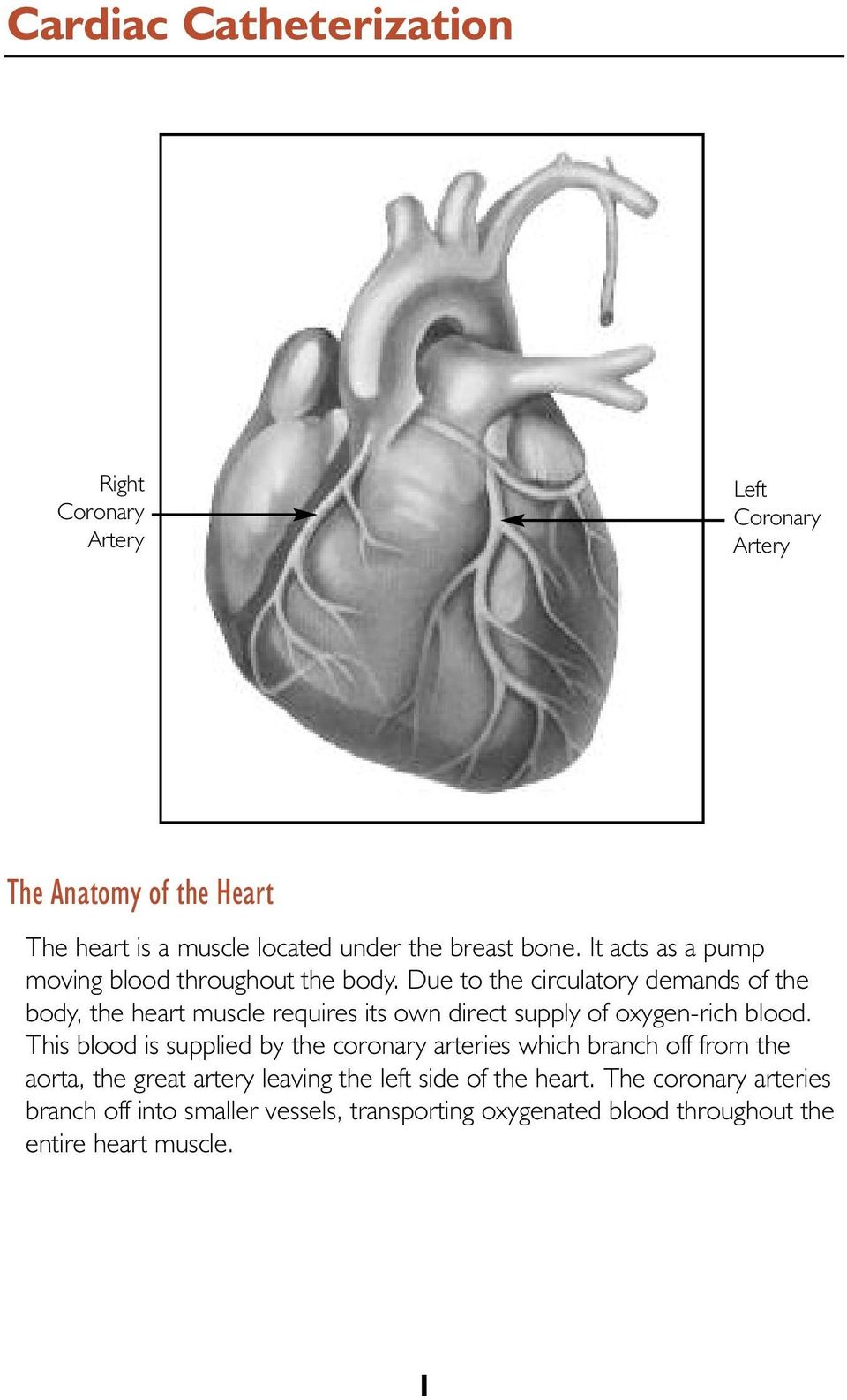 Due to the circulatory demands of the body, the heart muscle requires its own direct supply of oxygen-rich blood.