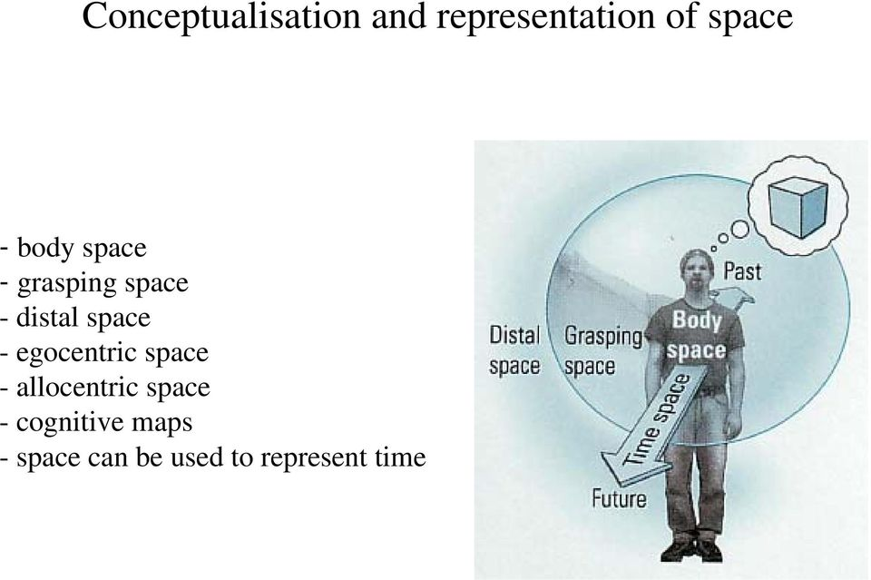 - egocentric space - allocentric space -
