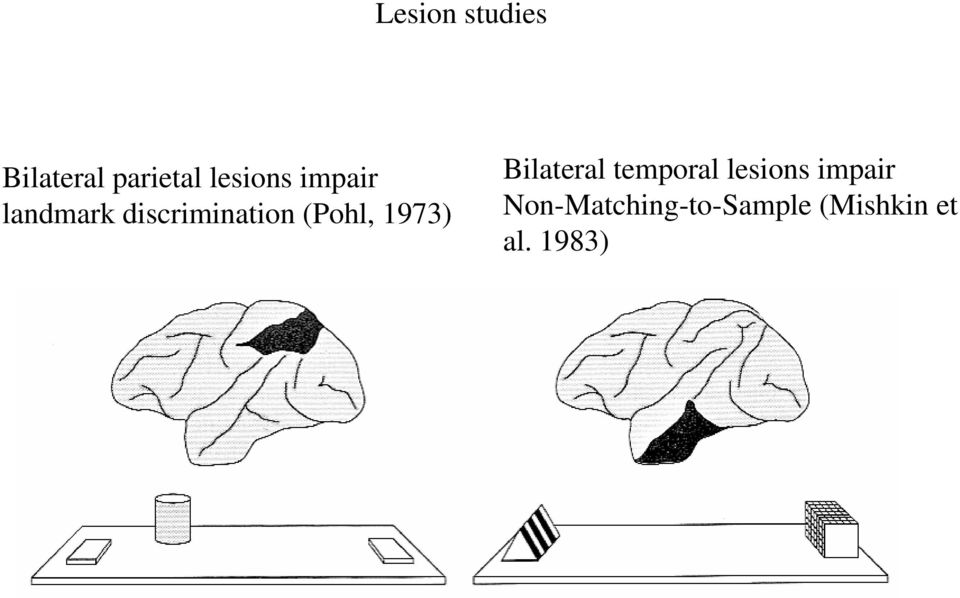 (Pohl, 1973) Bilateral temporal lesions