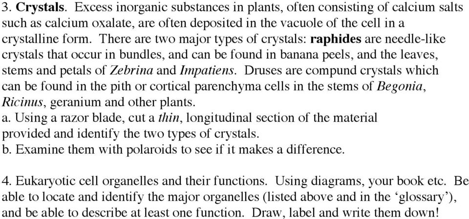 Druses are compund crystals which can be found in the pith or cortical parenchyma cells in the stems of Begonia, Ricinus, geranium and other plants. a. Using a razor blade, cut a thin, longitudinal section of the material provided and identify the two types of crystals.