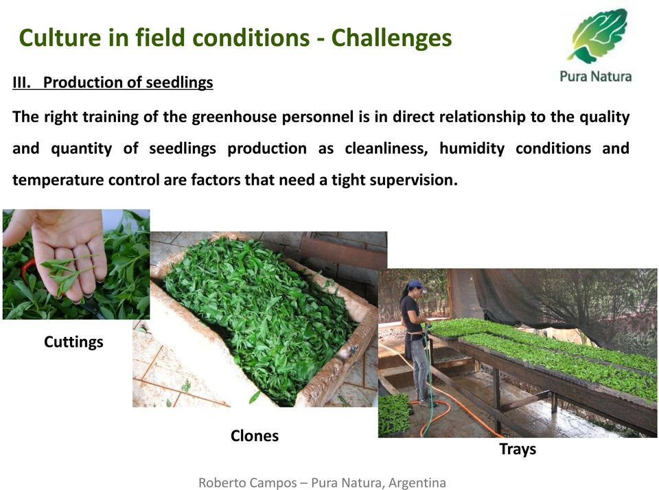 seedlings production as cleanliness, humidity conditions and