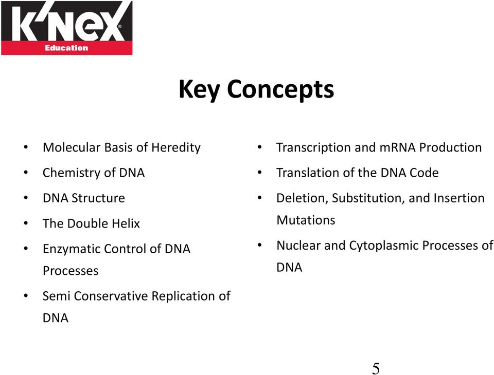 Processes Semi Conservative Replication of DNA Translation of the DNA Code