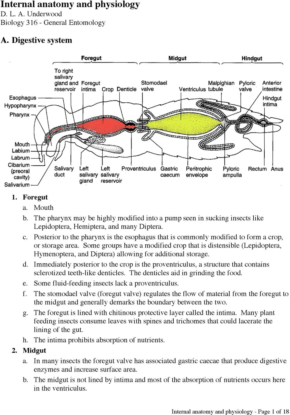 Internal anatomy and physiology D. L. A. Underwood Biology General ...