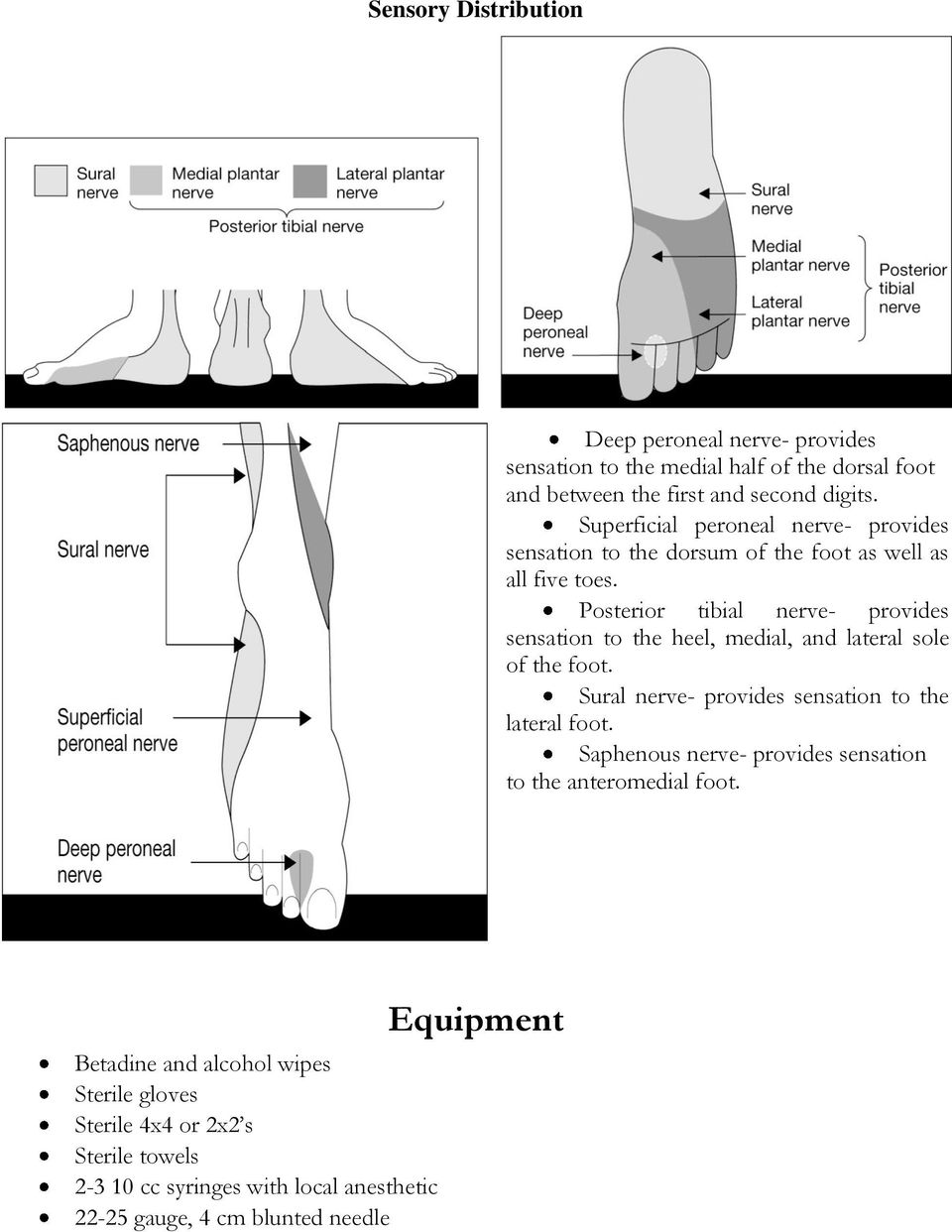 Posterior tibial nerve- provides sensation to the heel, medial, and lateral sole of the foot. Sural nerve- provides sensation to the lateral foot.