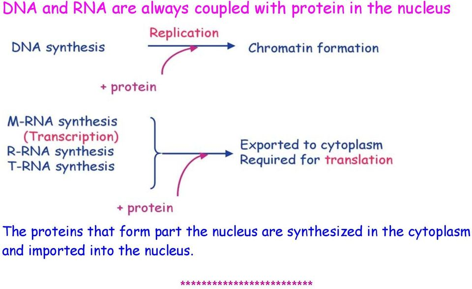 nucleus are synthesized in the cytoplasm and