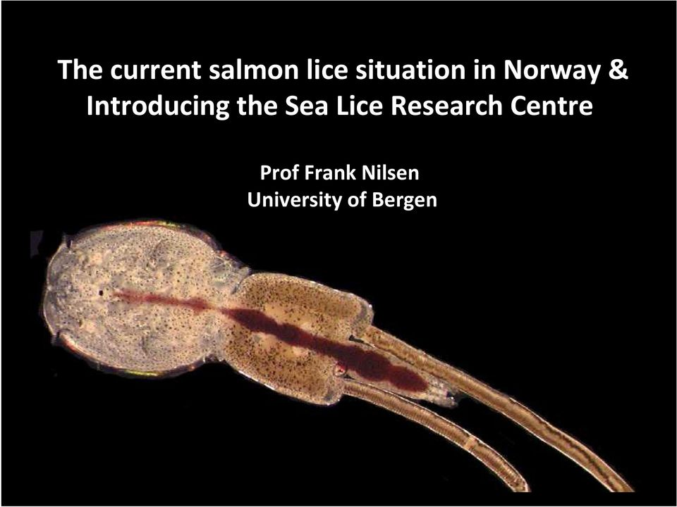 Introducing the Sea Lice