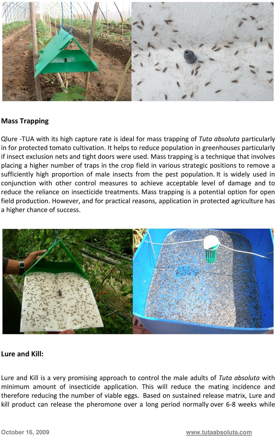 Mass trapping is a technique that involves placing a higher number of traps in the crop field in various strategic positions to remove a sufficiently high proportion of male insects from the pest