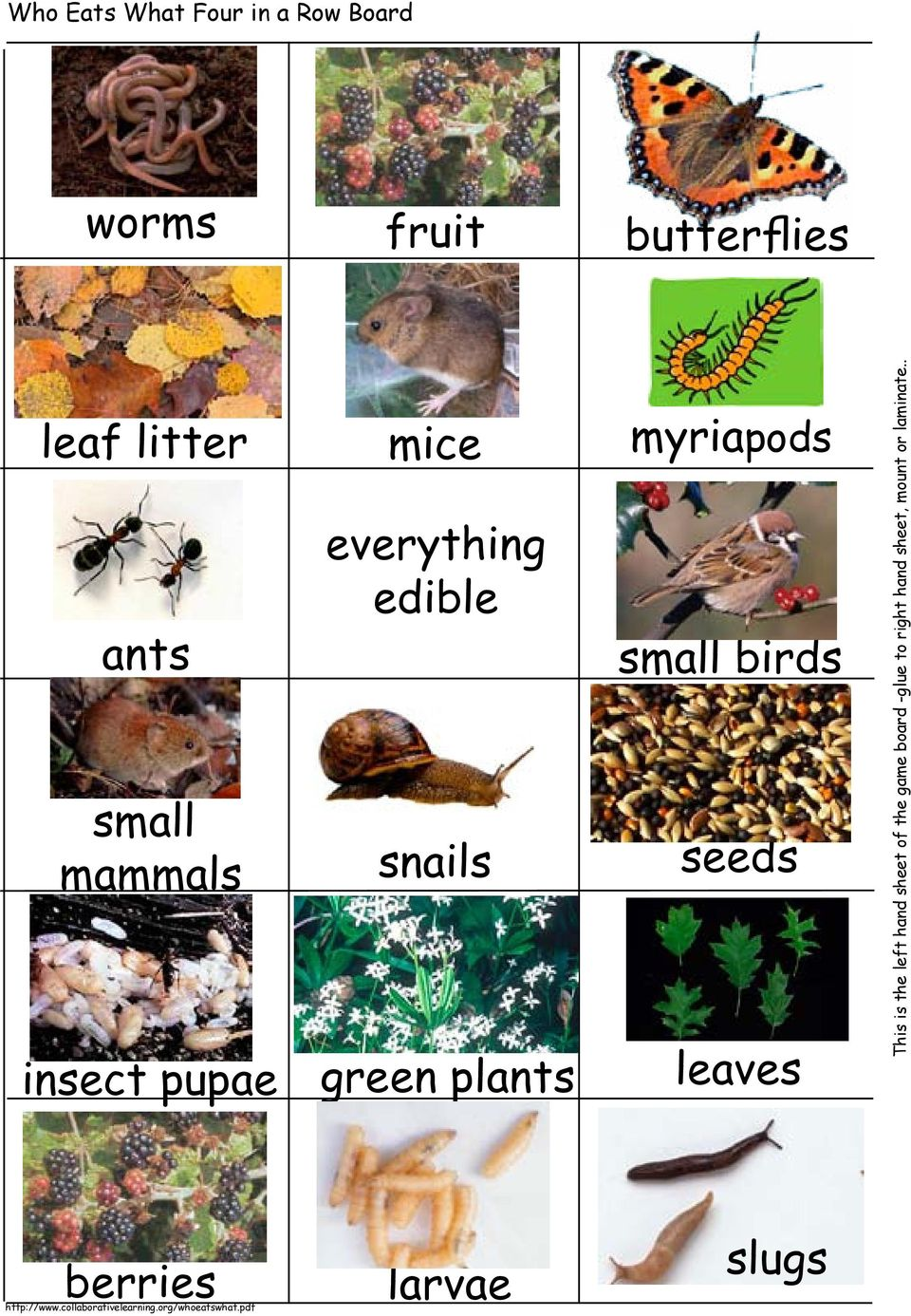 seeds insect pupae green plants leaves This is the left hand sheet of the
