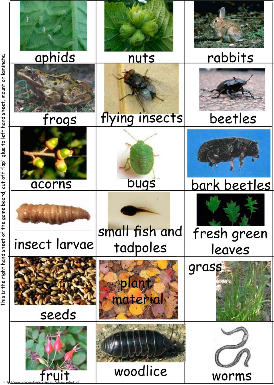 aphids nuts rabbits frogs flying insects beetles acorns bugs bark
