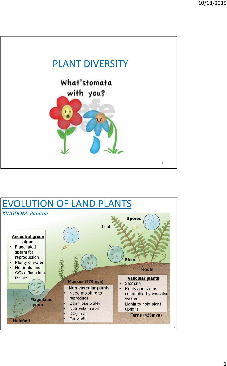 (470mya) Non vascular plants Need moisture to reproduce Can t lose water Nutrients in soil CO 2 in air Gravity!