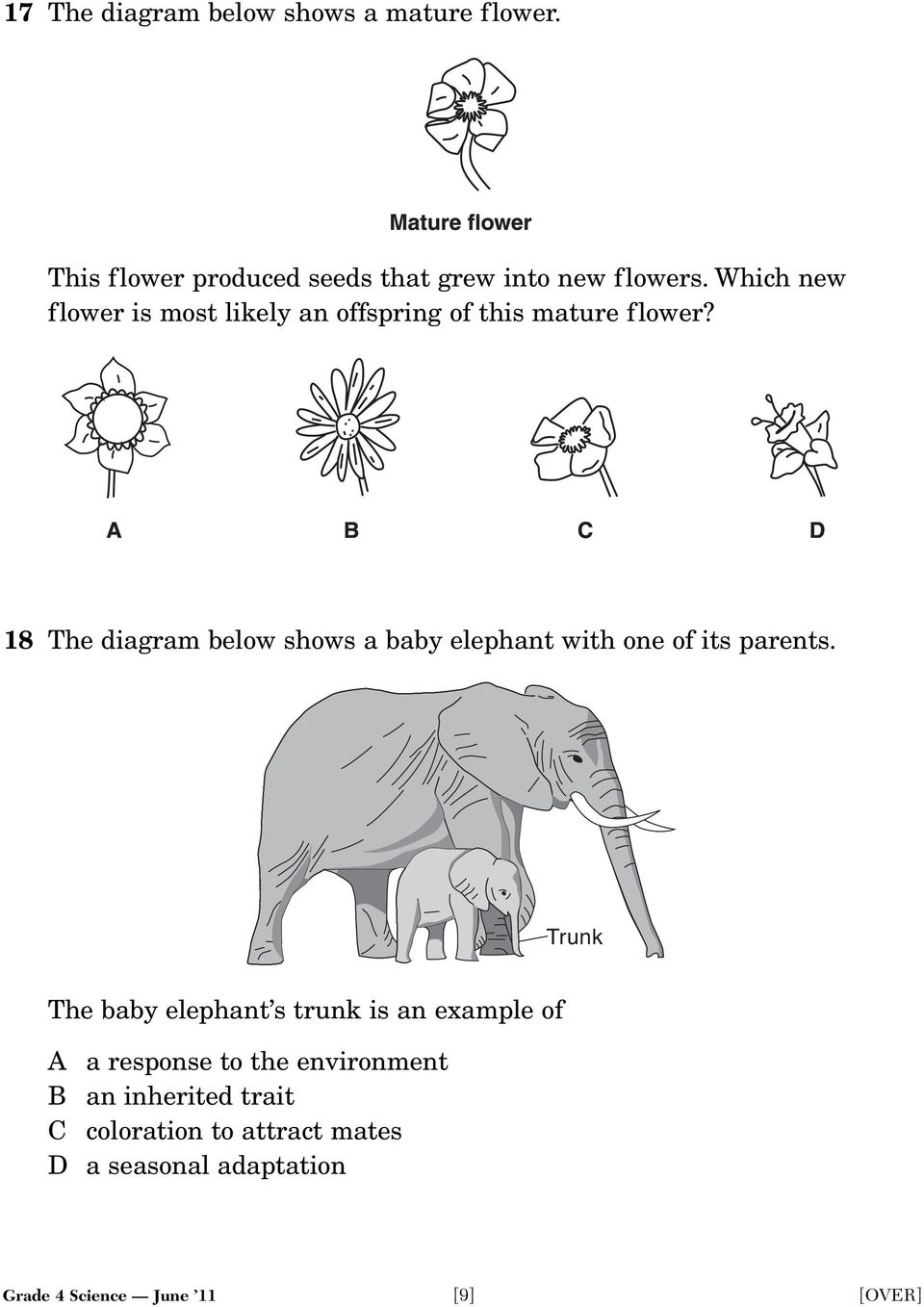 18 The diagram below shows a baby elephant with one of its parents.
