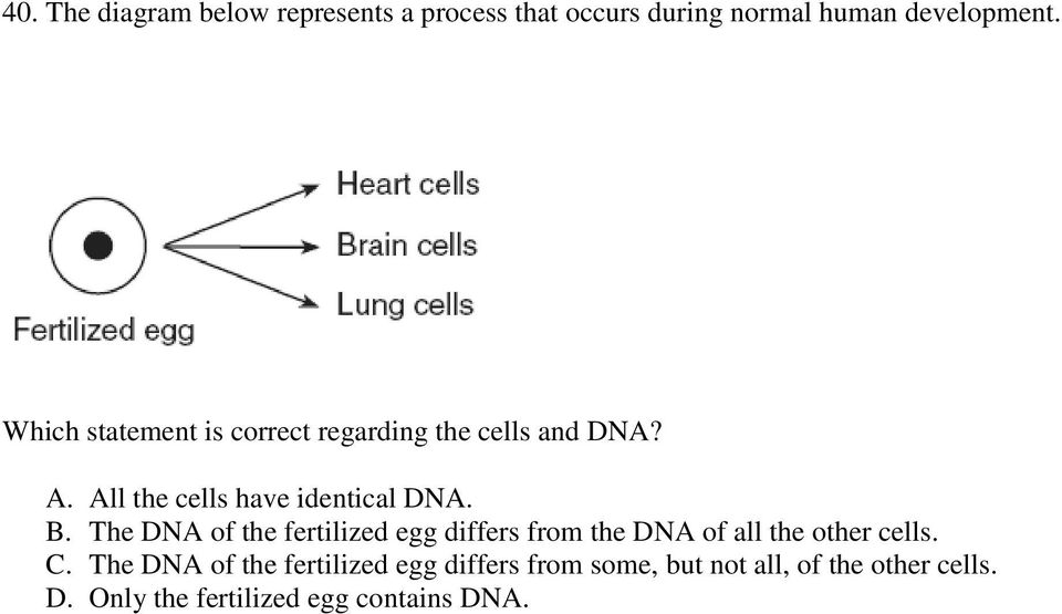 The DNA of the fertilized egg differs from the DNA of all the other cells. C.