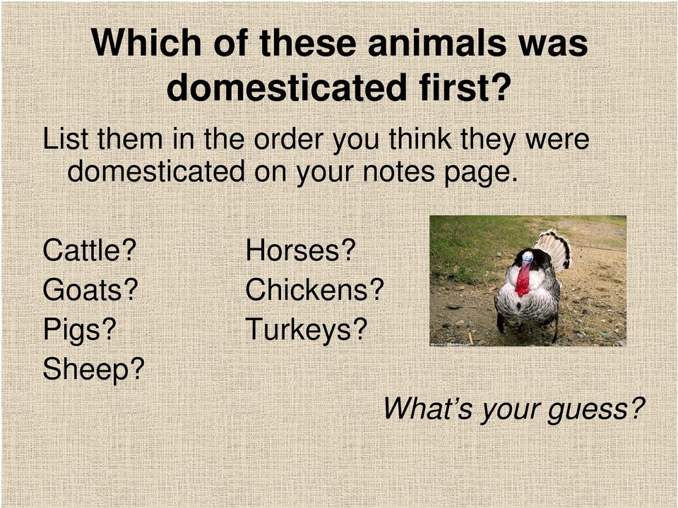 domesticated on your notes page. Cattle? Goats?