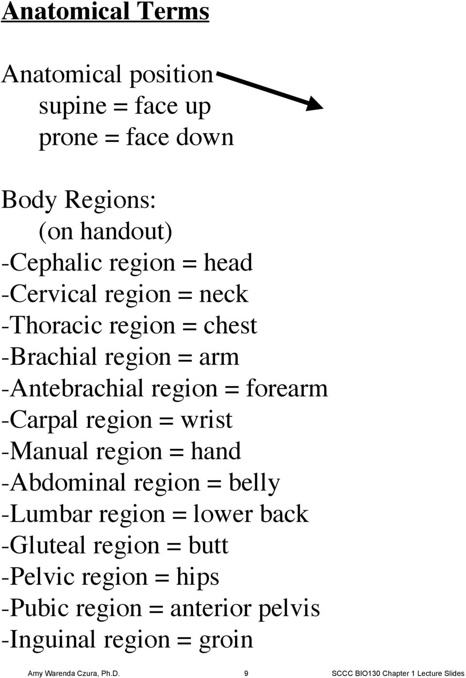 wrist -Manual region = hand -Abdominal region = belly -Lumbar region = lower back -Gluteal region = butt -Pelvic region =