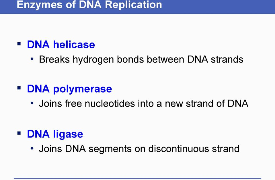 Joins free nucleotides into a new strand of DNA