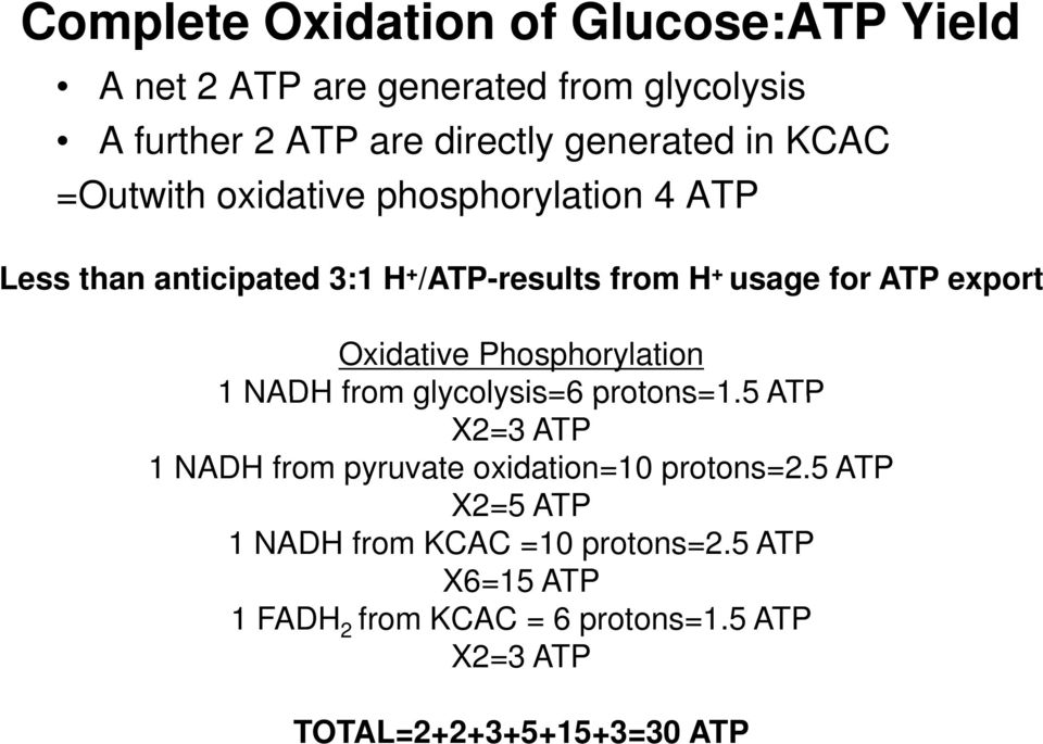 Oxidative Phosphorylation 1 NADH from glycolysis=6 protons=1.5 ATP X2=3 ATP 1 NADH from pyruvate oxidation=10 protons=2.