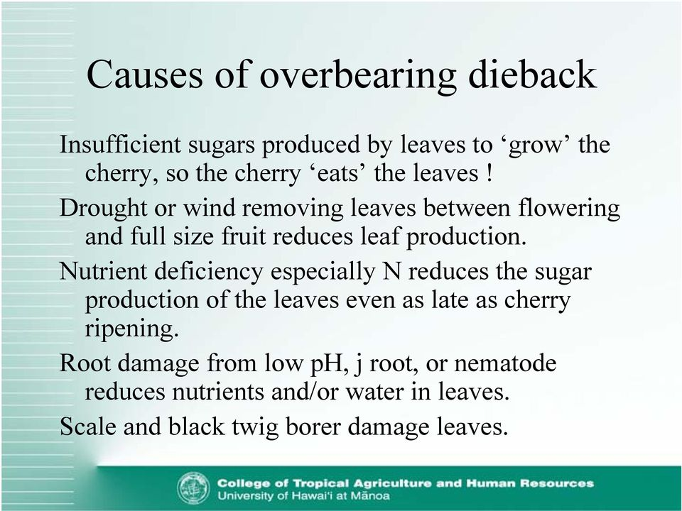 Nutrient deficiency especially N reduces the sugar production of the leaves even as late as cherry ripening.