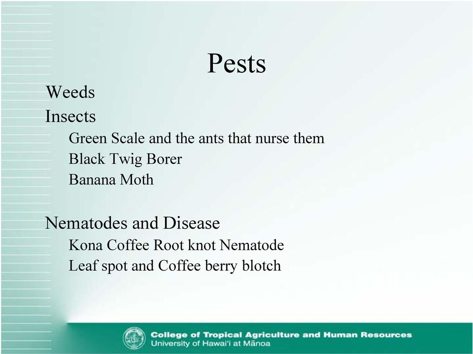 Banana Moth Nematodes and Disease Kona