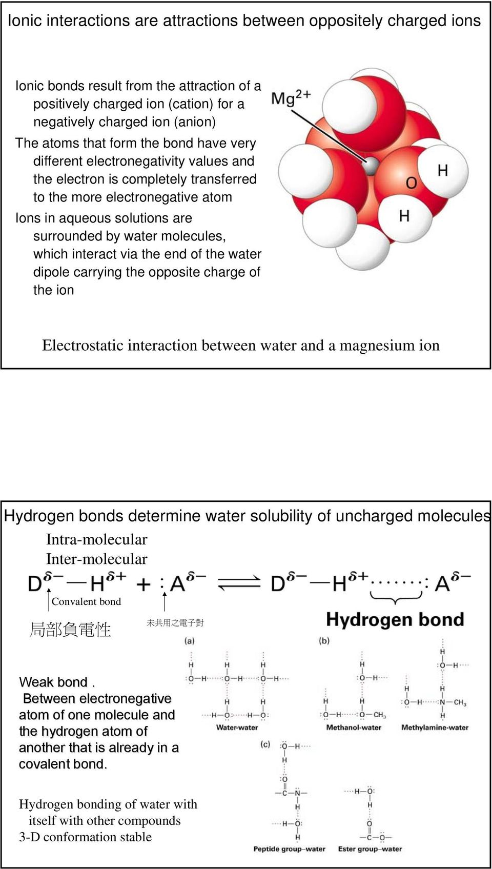 interact via the end of the water dipole carrying the opposite charge of the ion Electrostatic interaction between water and a magnesium ion Hydrogen bonds determine water solubility of uncharged