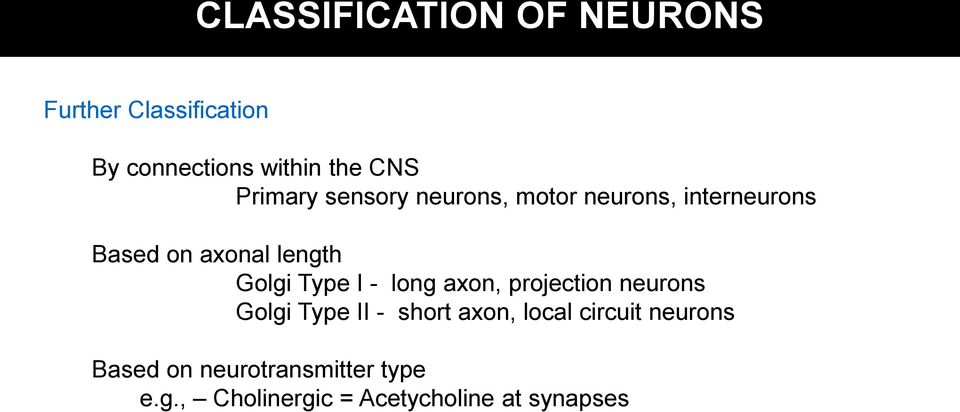 Type I - long axon, projection neurons Golgi Type II - short axon, local circuit