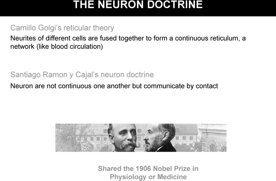 circulation) Santiago Ramon y Cajal s neuron doctrine Neuron are not continuous