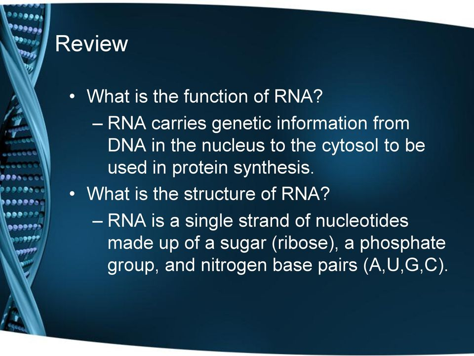 to be used in protein synthesis. What is the structure of RNA?
