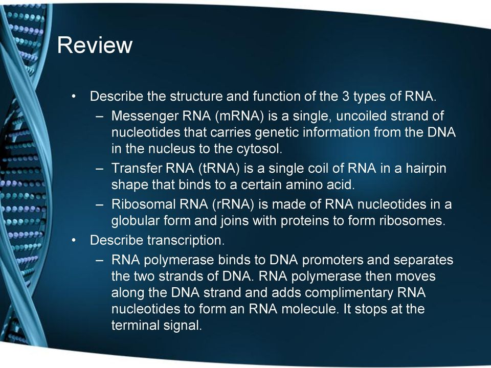 Transfer RNA (trna) is a single coil of RNA in a hairpin shape that binds to a certain amino acid.