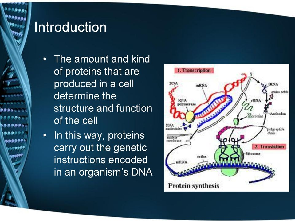 function of the cell In this way, proteins carry