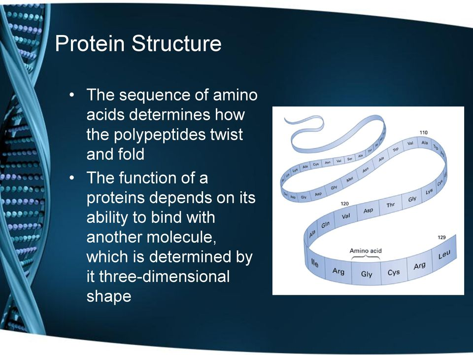 function of a proteins depends on its ability to bind