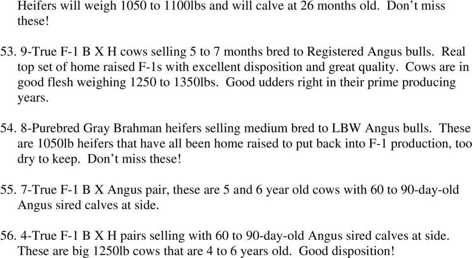 8-Purebred Gray Brahman heifers selling medium bred to LBW Angus bulls. These are 1050lb heifers that have all been home raised to put back into F-1 production, too dry to keep. Don t miss these! 55.