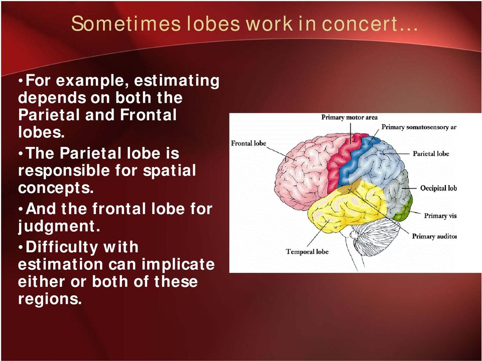 The Parietal lobe is responsible for spatial concepts.