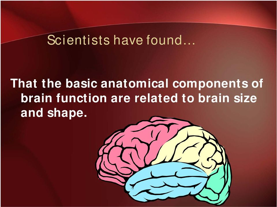 components of brain function