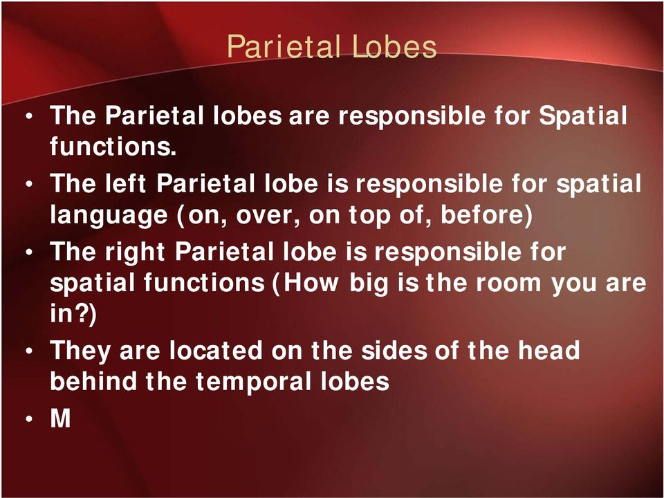 before) The right Parietal lobe is responsible for spatial functions (How big is