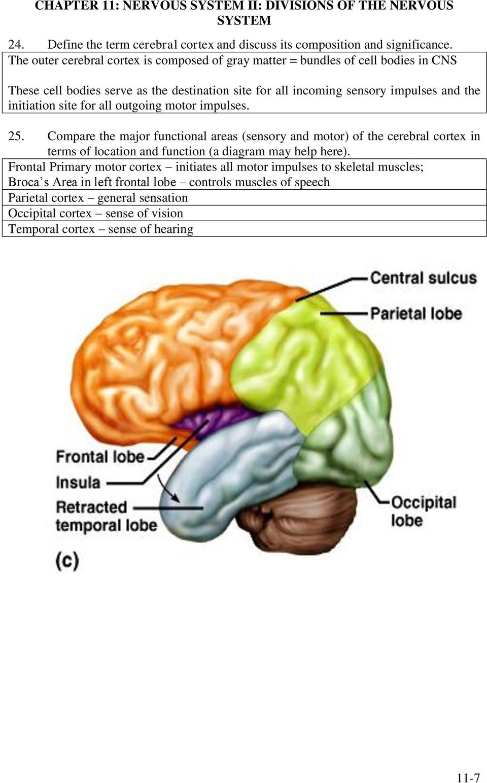 site for all outgoing motor impulses. 25. Compare the major functional areas (sensory and motor) of the cerebral cortex in terms of location and function (a diagram may help here).