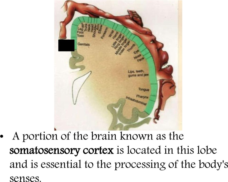 located in this lobe and is