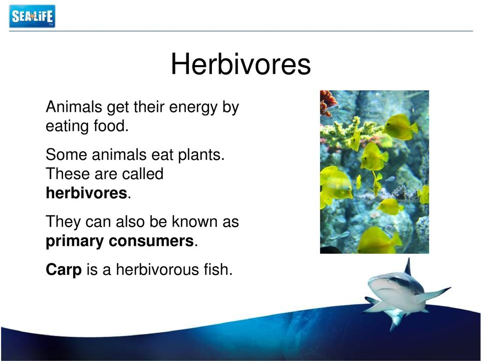 These are called herbivores.