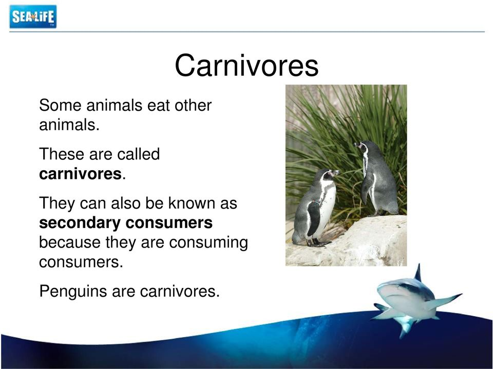 Carnivores They can also be known as