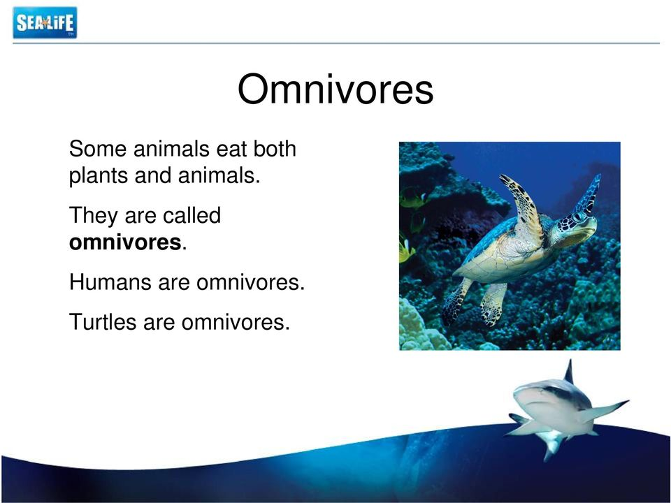 They are called omnivores.