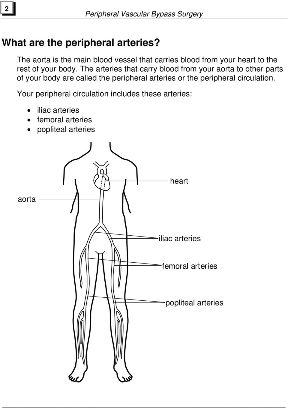 The arteries that carry blood from your aorta to other parts of your body are called the peripheral arteries or the