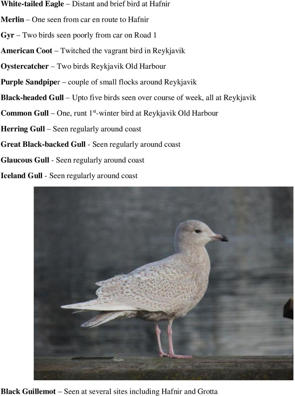 over course of week, all at Reykjavik Common Gull One, runt 1 st -winter bird at Reykjavik Old Harbour Herring Gull Seen regularly around coast Great Black-backed Gull -