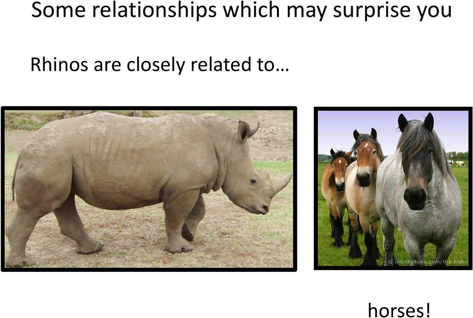 you Rhinos are