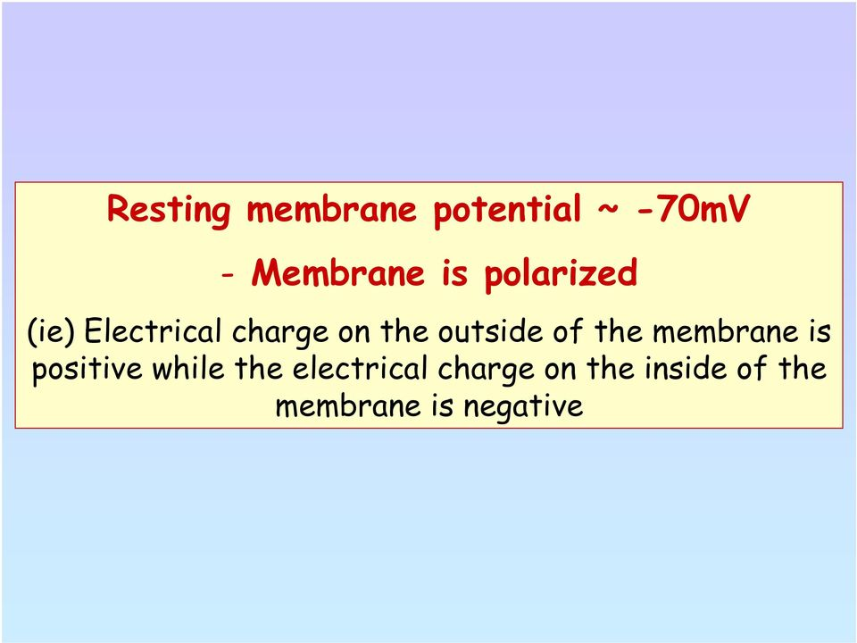 of the membrane is positive while the electrical