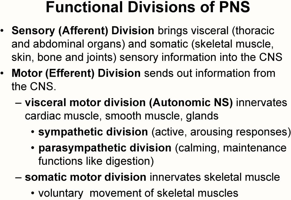 visceral motor division (Autonomic NS) innervates cardiac muscle, smooth muscle, glands sympathetic division (active, arousing responses)
