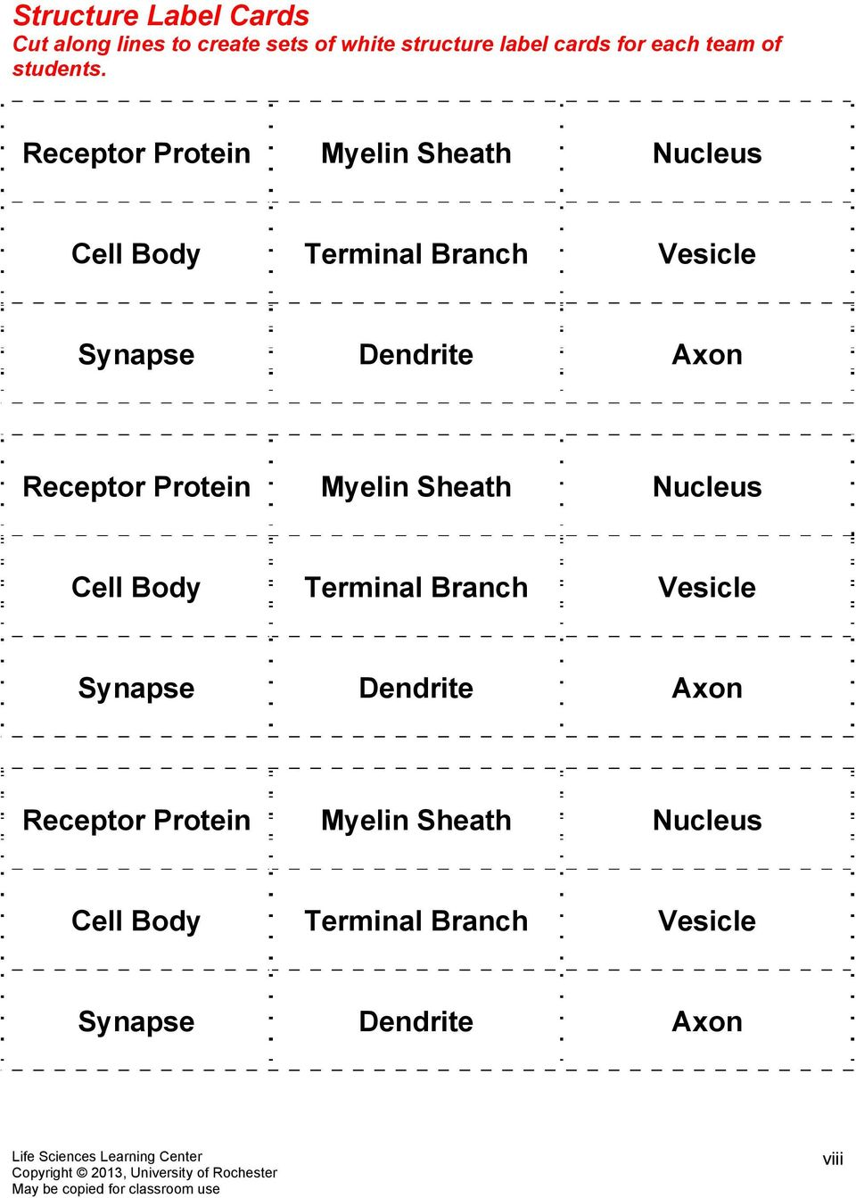 Receptor Protein Myelin Sheath Nucleus Cell Body Terminal Branch Vesicle Synapse Dendrite Axon