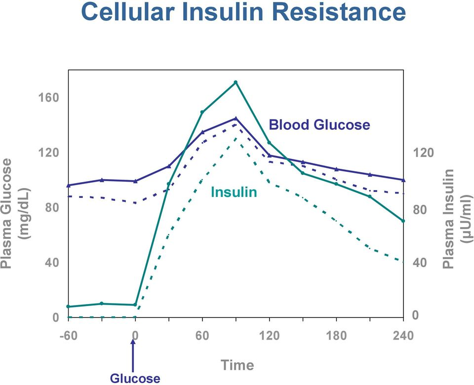 40 Insulin 120 80 40 Plasma Insulin