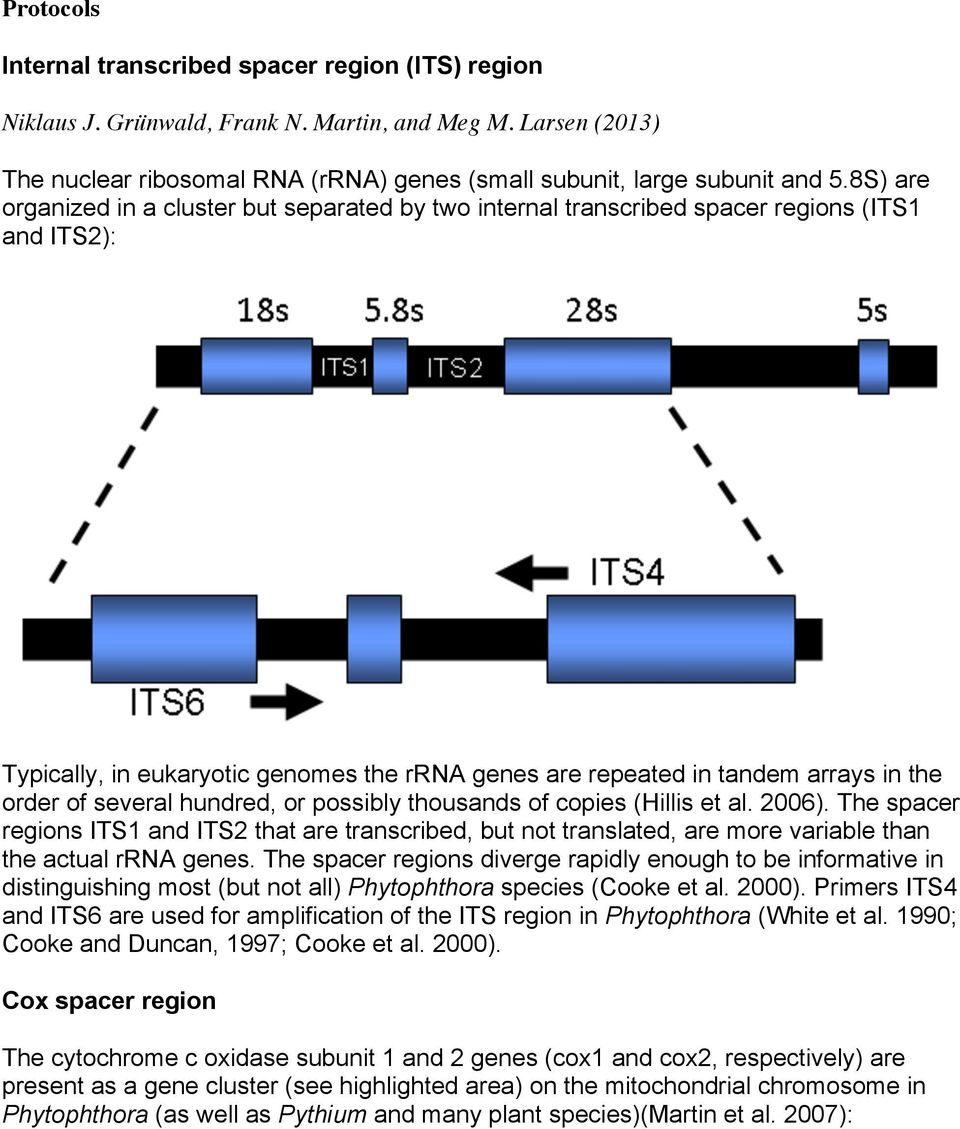 several hundred, or possibly thousands of copies (Hillis et al. 2006). The spacer regions ITS1 and ITS2 that are transcribed, but not translated, are more variable than the actual rrna genes.