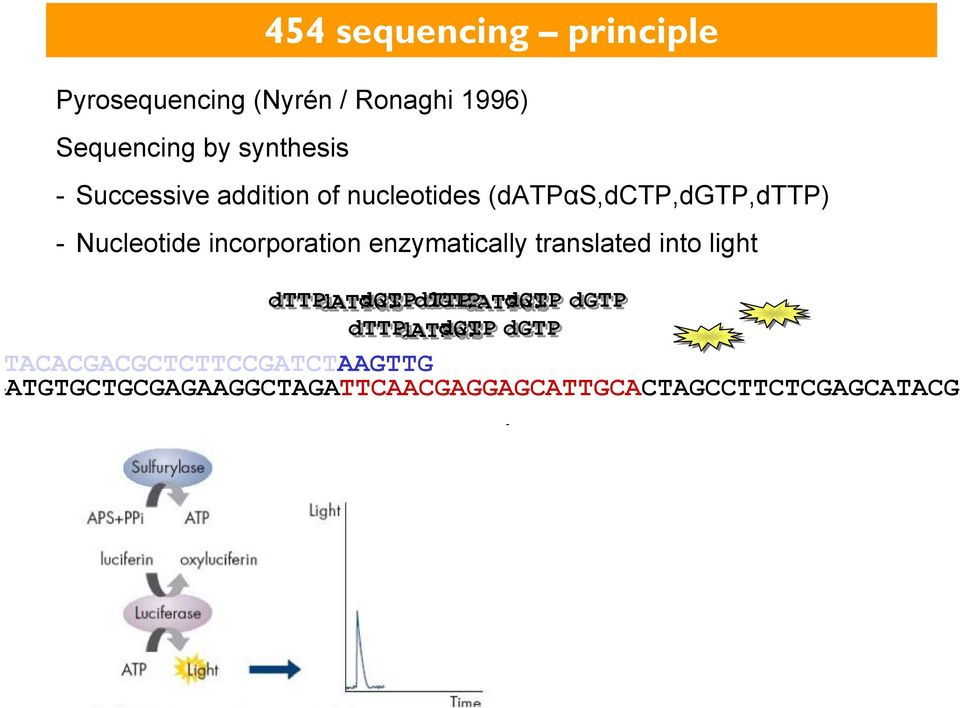 enzymatically translated into light dttp datpαs dctp dttp dgtp datpαs dctp dgtp dttp datpαs